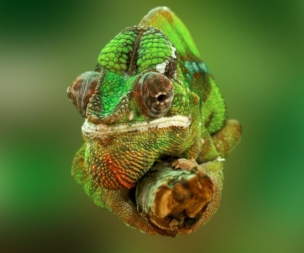 El cuidado especial para los animales exóticos