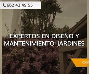 Poda de palmeras en Granada - Malimpa Servicios