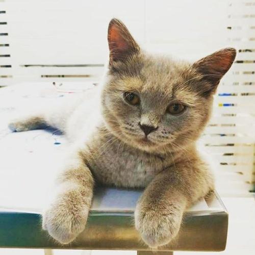 Veterinario para gatos en Manresa