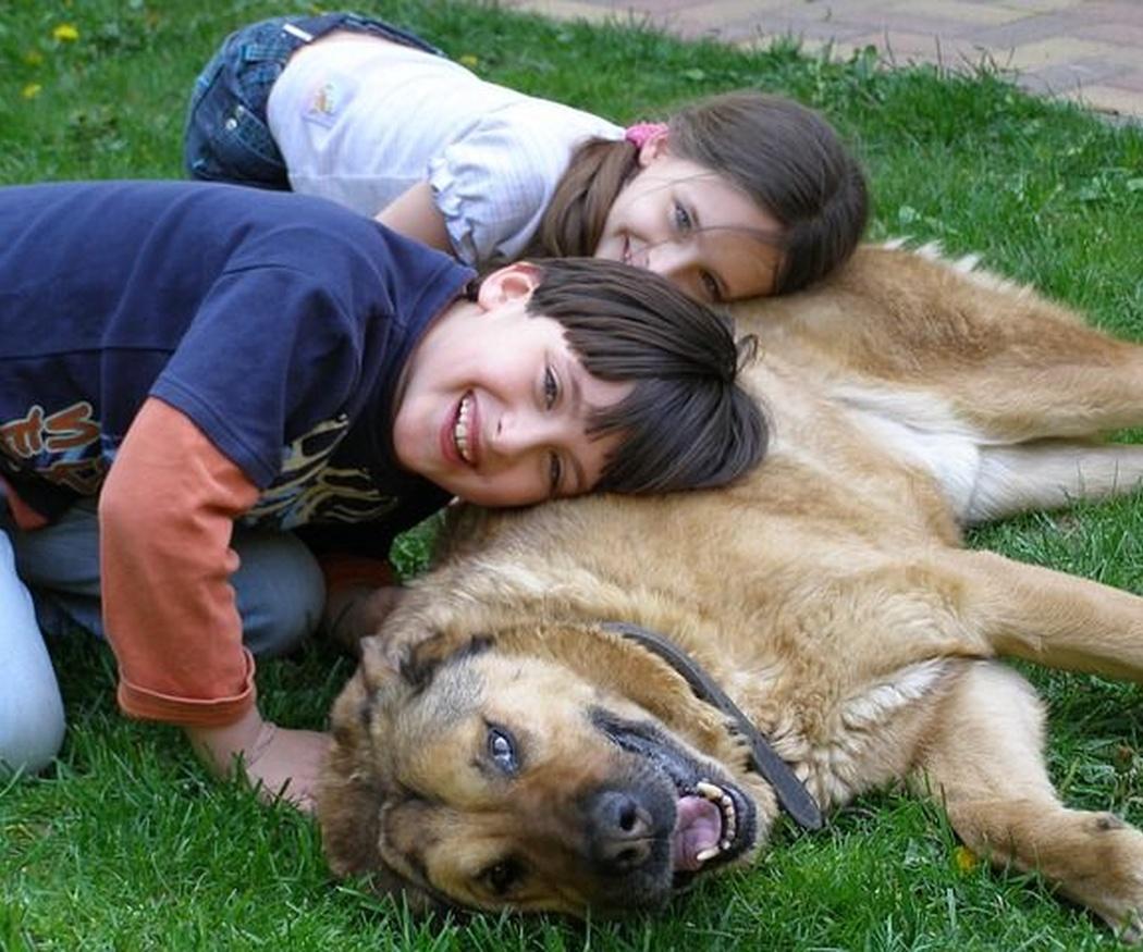 5 de las razas de perro más cariñosas