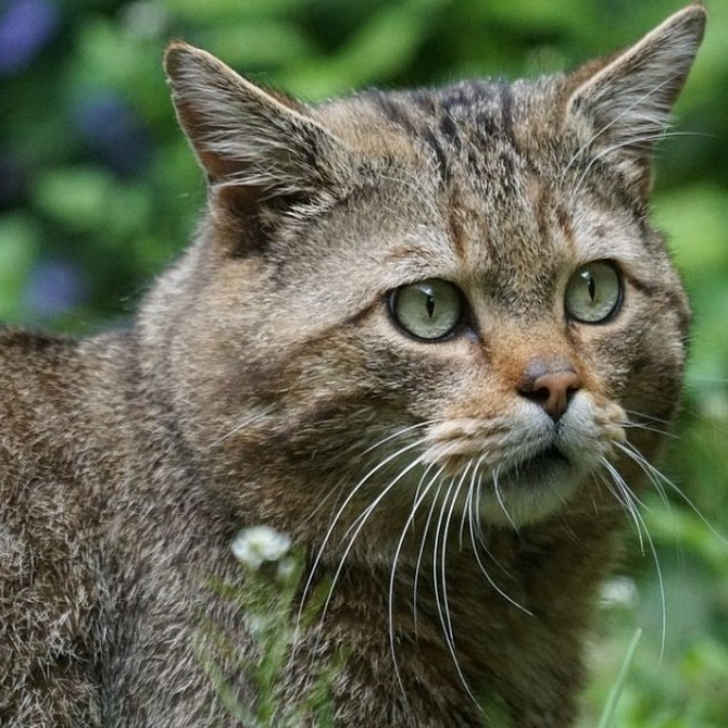 Consejos para llevar el gato al veterinario