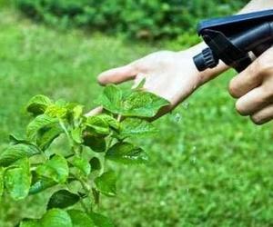 Eliminación de plagas en el jardín