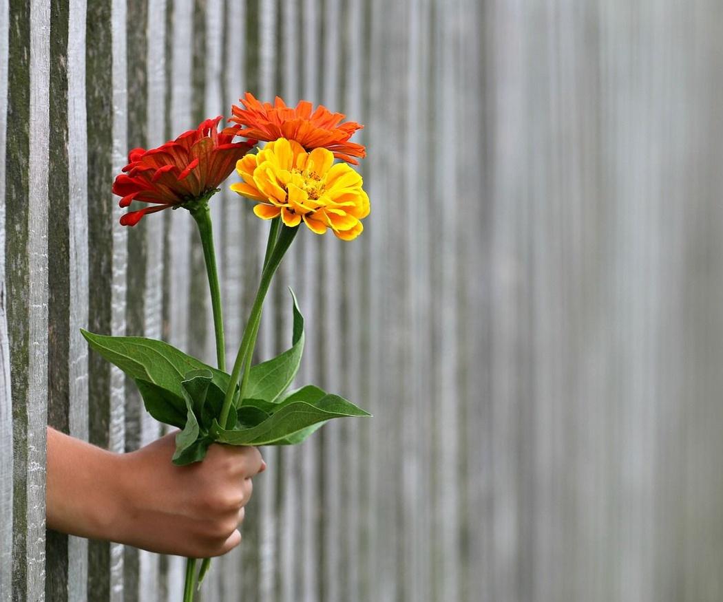 Las flores del verano por excelencia