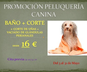 Promoción peluquería canina.