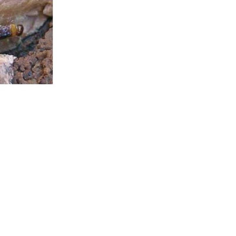 Termitas: Servicios de Artrops