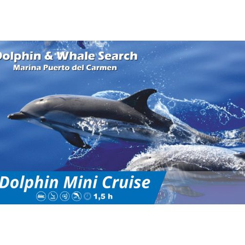 Mini Dolphin Cruise: Excursions de Lanzarote Sea Tours