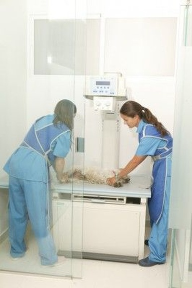 Radiología: Servicios de Hospital Veterinario La Salle Abierto 24 horas