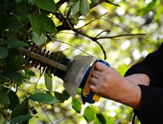 Poda de árboles y jardines : Trabajos  de Jardiner Zamora