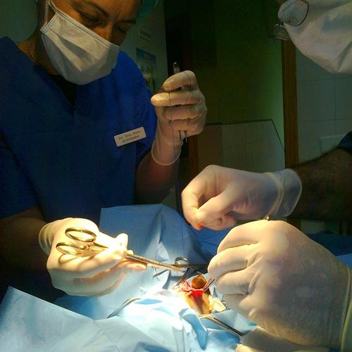 Veterinarios en Toledo | Clínica Veterinaria Albeitar