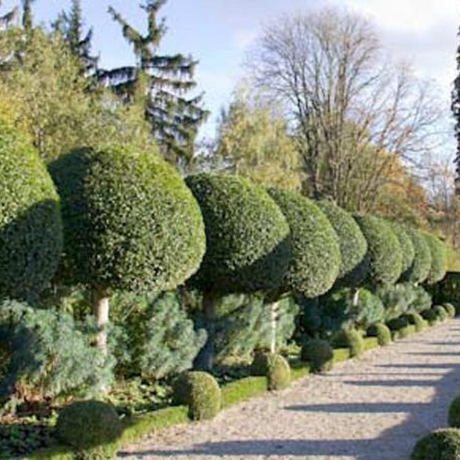 Claves para diseñar un jardín (1)