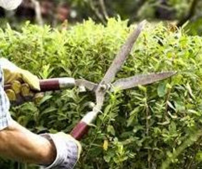 Jardinería: Servicios de Master Clean