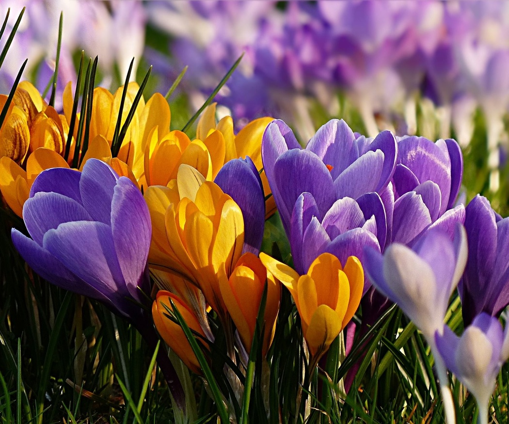 Cinco claves para el mantenimiento de jardines en primavera