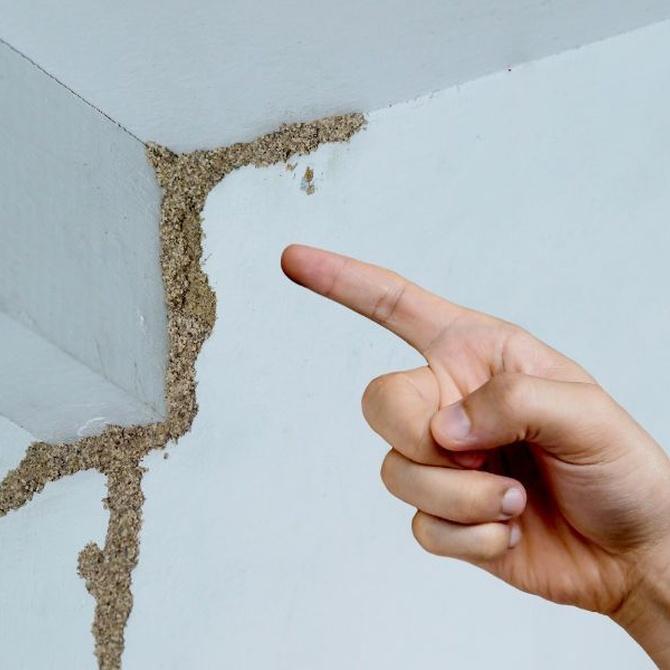 La reproducción de las termitas
