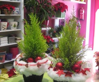 Begonia: Catálogo de flores y plantas de Floristería Pétalos