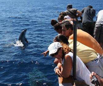 Ballenas y Delfines (2 horas): Excursiones de Turmares Tarifa