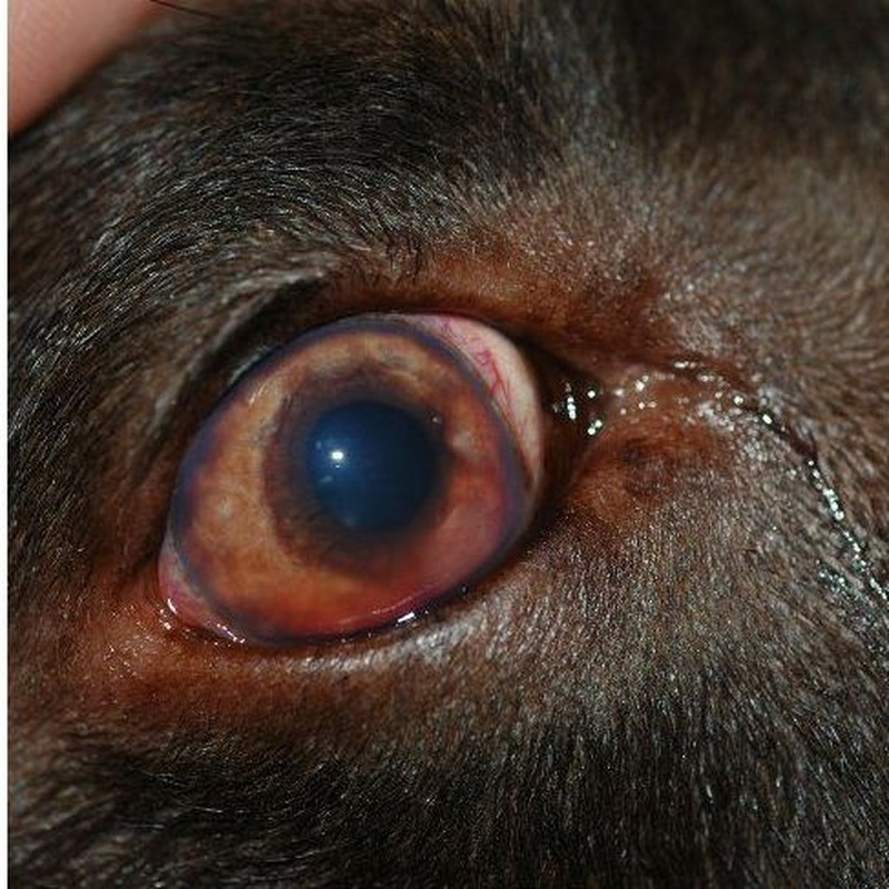 Medicina interna canina y felina: Servicios de Anubis Clínica Veterinaria