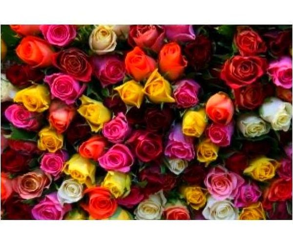 Flores y Plantas
