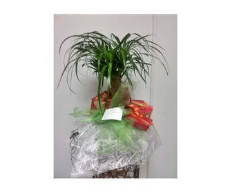 Baúl decorativo con flor natural: Catálogo de FLORISTERÍA JOMACO  Tanatorio As Burgas