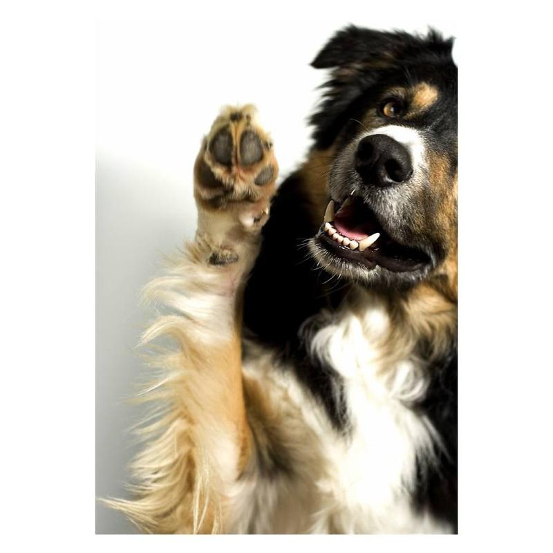 Ecografías: Servicios veterinarios de Centro Veterinario Ciudad de los Ángeles