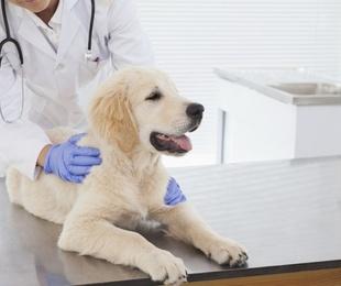 Las enfermedades más habitules en cachorros