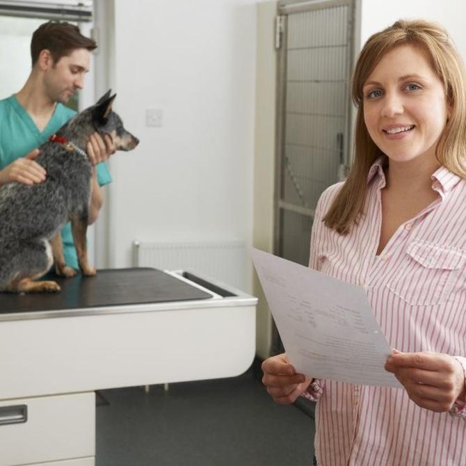La importancia de un servicio de urgencias para animales
