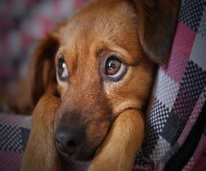 Cómo cuidar a tu perro durante la cuarentena del COVID-19