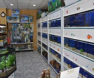 Especialistas en acuariofilia en Cartagena
