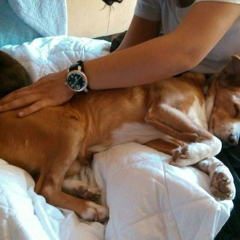Terapia Craneosacral en animales: Qué hacemos de Edurne Cornejo Gómez