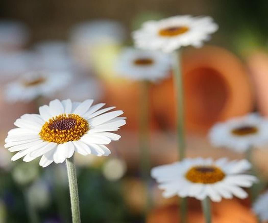 Cinco claves para tener un jardín perfecto
