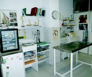 Veterinarios, Piensos en Galapagar | Clínica Veterinaria Galapagar