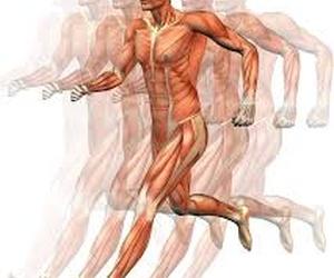 Todos los productos y servicios de Fisioterapia: Fisiocentre Salut