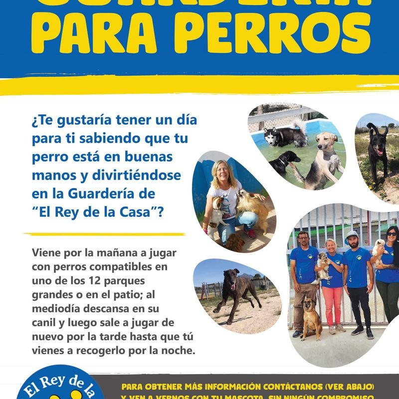 Guardería: Servicios de Hotel Canino y Felino El Rey de la Casa