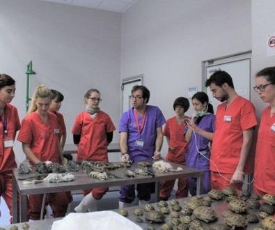 Curso de Urgencias en Animales Exoticos para futuros veterinarios
