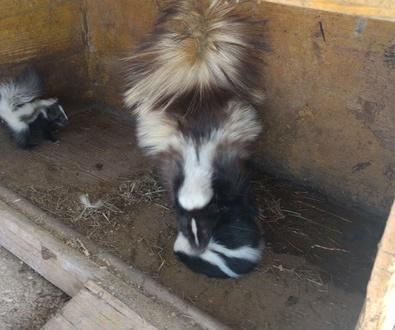 Servicios Veterinarios a Núcleos Zoológicos