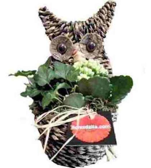 Búho de la suerte: Catálogo de Regalos de Floresdalia.com