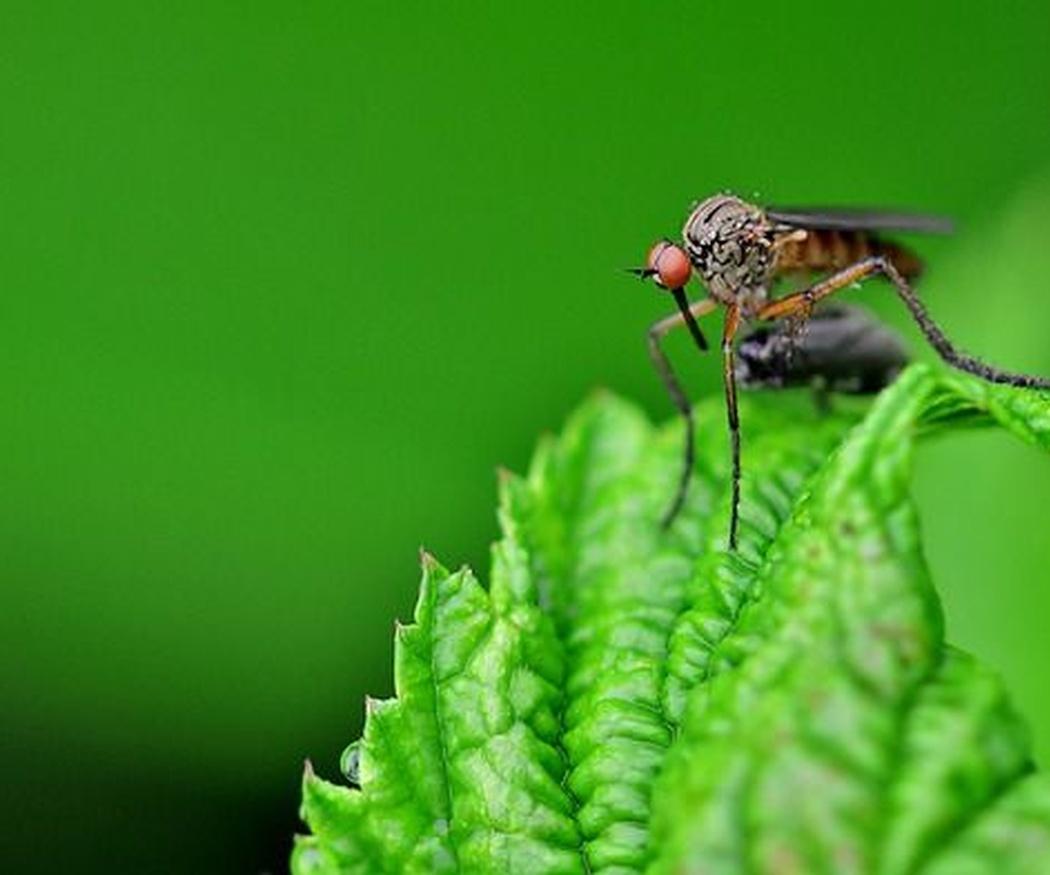 6 plantas que eliminan los mosquitos