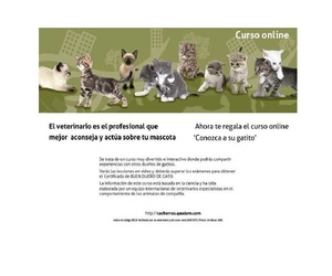 Conozca a su gatito