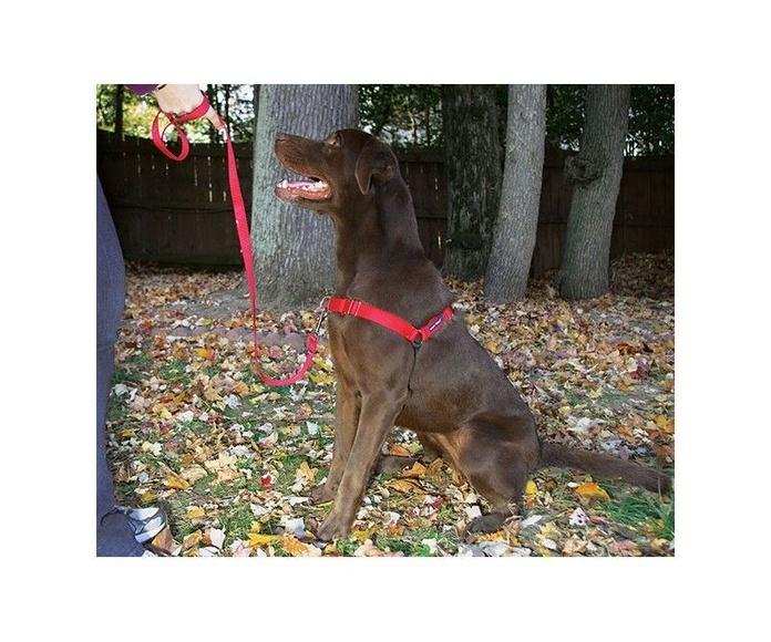Arnés Easy Walk: Productos y servicios de Més Que Gossos