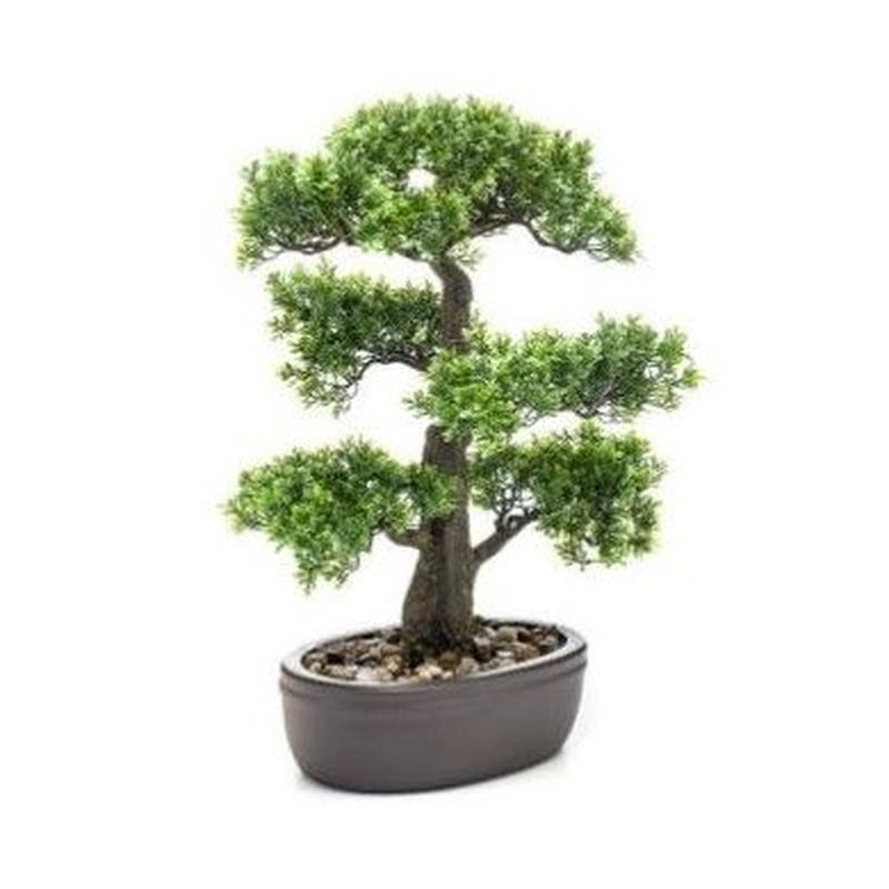 Bonsái Ficus: ¿Qué hacemos? de Ches Pa, S.L.