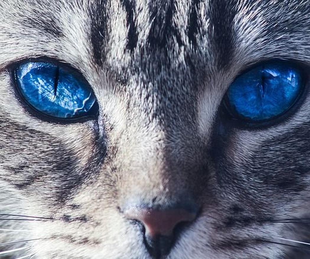 A tu gato también le gusta ir guapo