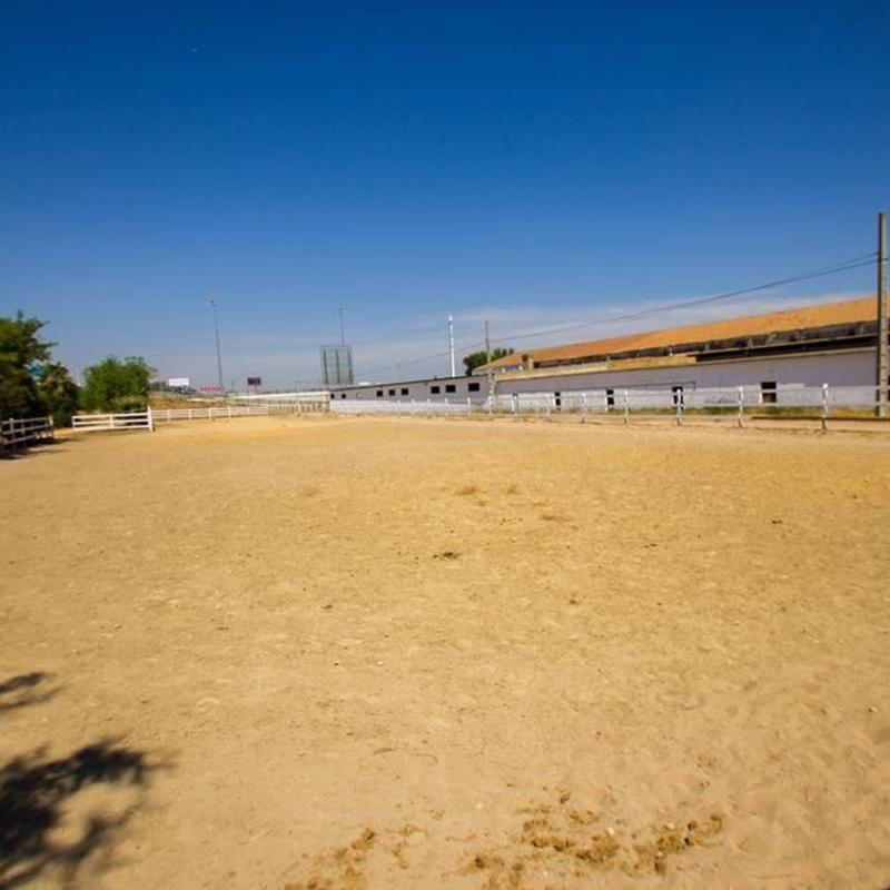 Alquiler de cuadras Sevilla: Nuestros servicios de Centro Hípico Doble M