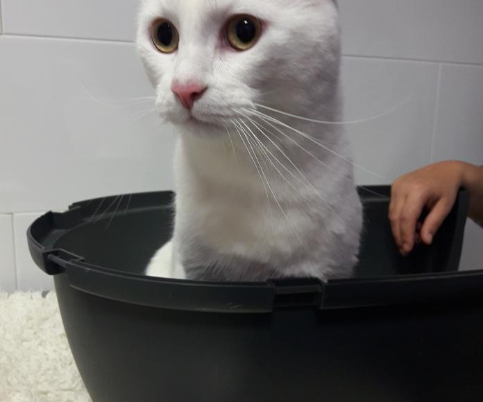 Consulta de gatos: Servicios de Clínica Veterinaria Pastoriza