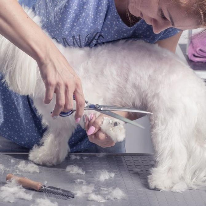 El frío y el corte de pelo en los perros