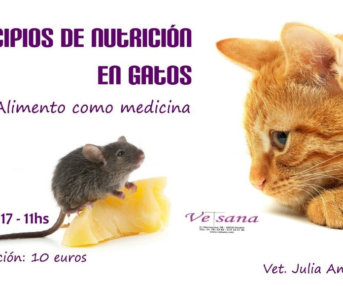 Principios de nutrición en gatos