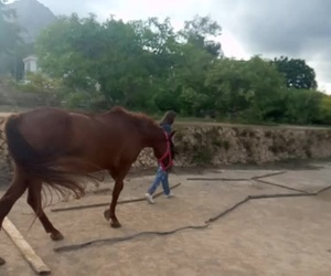 Sesión de coaching con caballos dentro del método Naturcoaching (R) desarrollo por Nathalie Amand en Qorisalud.