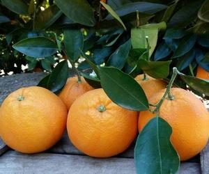 Naranjas de Valencia a domicilio