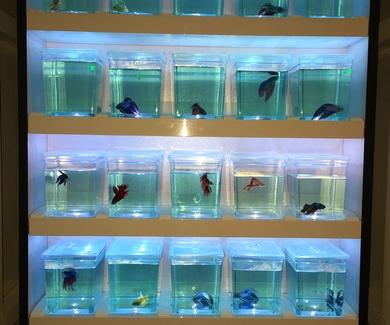 ¡Nuevo surtido de peces!