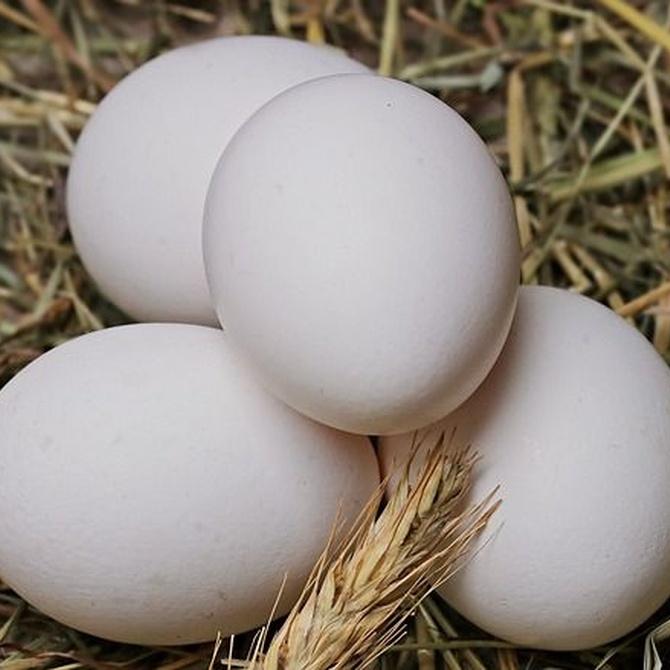 Diferentes usos de la clara de huevo