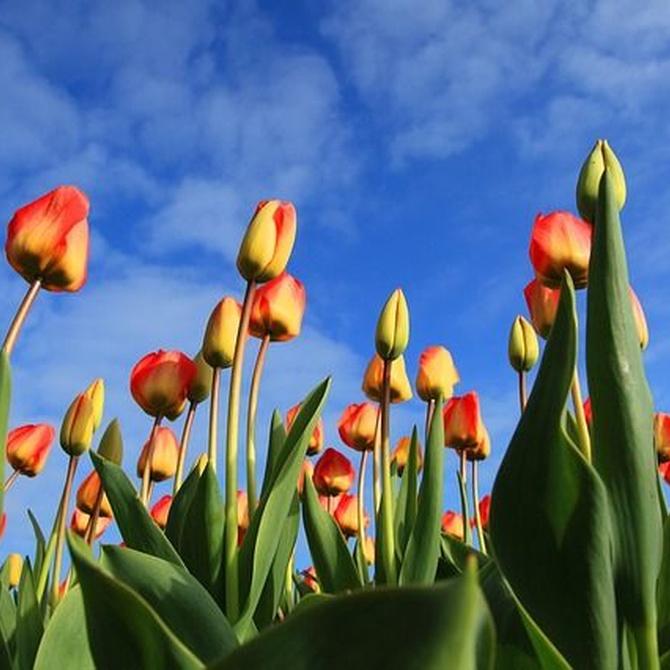 Las flores de invierno