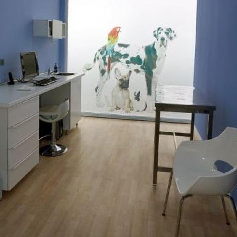 Acupuntura: Servicios de Clínica Veterinaria Minuvet León-Urgencias 24h